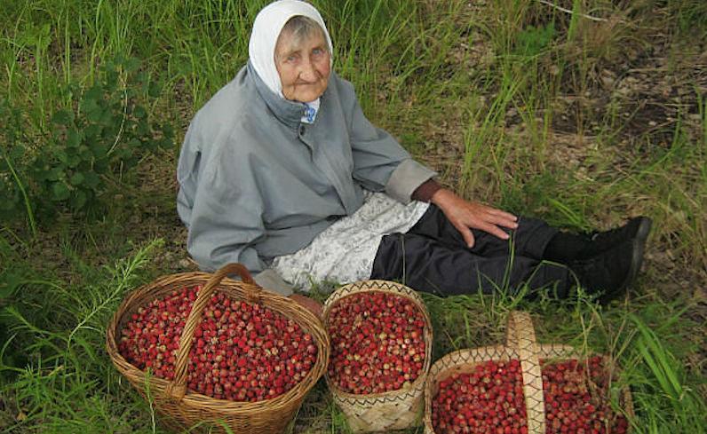 налог на грибы и ягоды.1